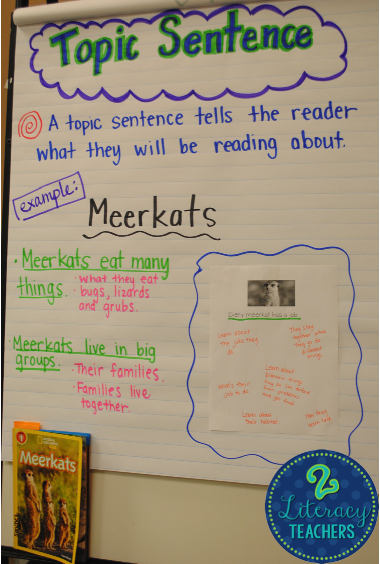 Topic Sentences and Owls!!
