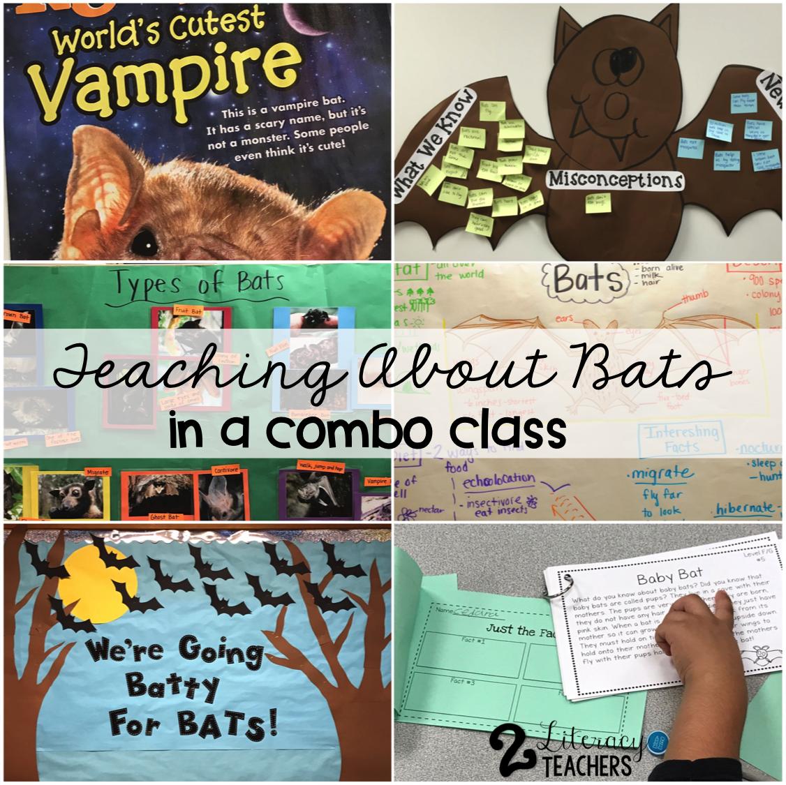 Teaching About Bats in a Combo Class